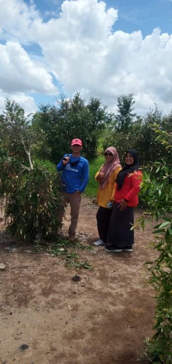 Forkom KPM Lakukan Pengembangan Kapasitas Masyarakat Budidaya Pohon Kayu Putih di Lahan Eks Tambang